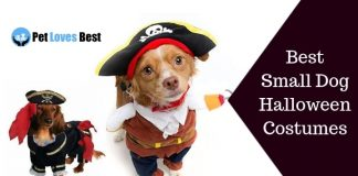 Best Small Dog Halloween Costumes Featured Image