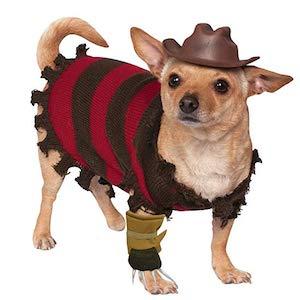 Best chihuahua dog halloween costume