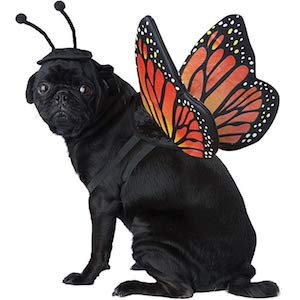 California Costumes Monarch Butterfly for Dog