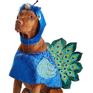 California Costumes Peacock Style Dog Outfit