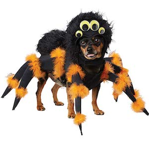 Spider Costume for Small Dogs