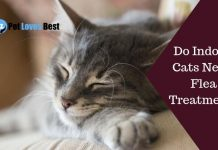 Do Indoor Cats Need Flea Treatment Featured Image