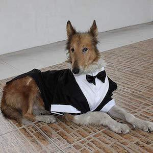 Evursua Tuxedo for Small Dogs