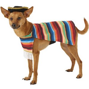 Frisco Fiesta Serape Dog & Cat Costume