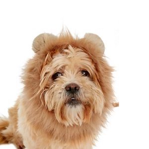 Frisco Lion Mane Dog Costume