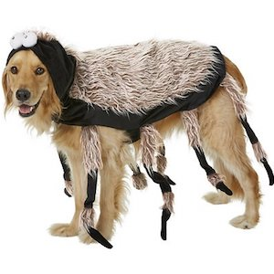 Spider Costume for Large Dogs