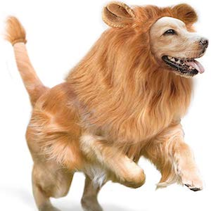 GALOPAR Lion Mane for Dogs