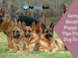 German Shepherd Puppy Care Tips For New Dog Parents Featured Image