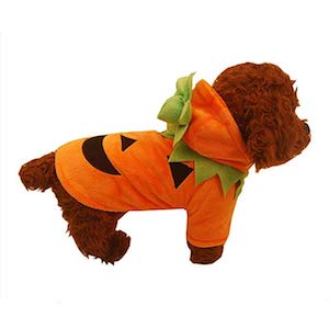 jack o lantern costume for chihuahua