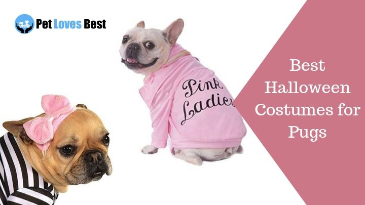 Best Halloween Costumes for Pugs Featured Image