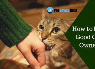 How to be a Good Cat Owner Featured Image
