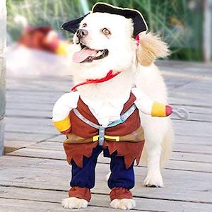 Small Dog Halloween Costume
