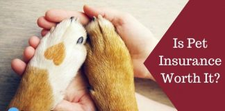 Is Pet Insurance Worth It Featured Image