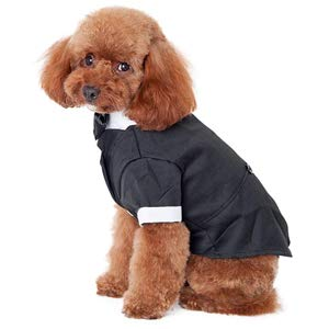 Dog Costumes for Small Dogs