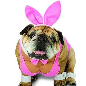 Rasta Imposta - Zelda Hunny Bunny Dog Wear