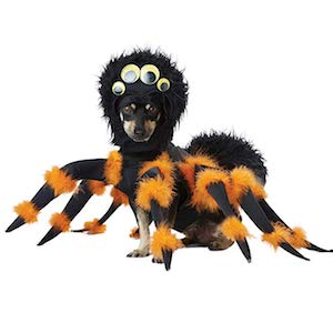 Spider Pup Costume for Dogs