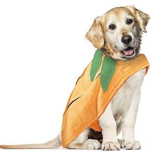 Vikedi Dog Pumpkin Apparel