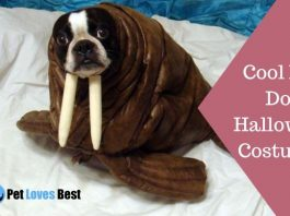 25 Cool DIY Dog Halloween Costumes Featured Image