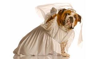 Bride Dress for Dogs