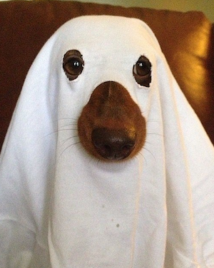 Ghosly Halloween Costume for Dog