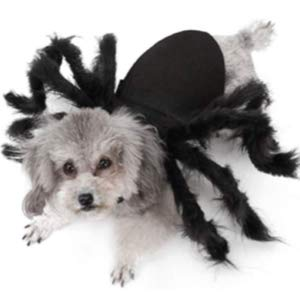 Idepet Pet Spider Halloween Costume for Dog