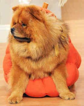 Pumpkin Halloween Costume for Dogs