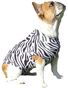Zebra Halloween costume for dogs