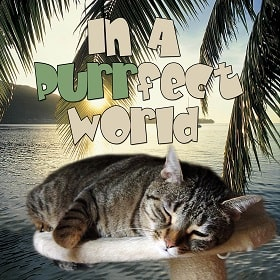 in a purrfect world podcast