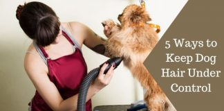 5 Ways to Keep Dog Hair Under Control Featured Image