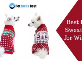 Best Dog Sweaters for Winter Featured Image