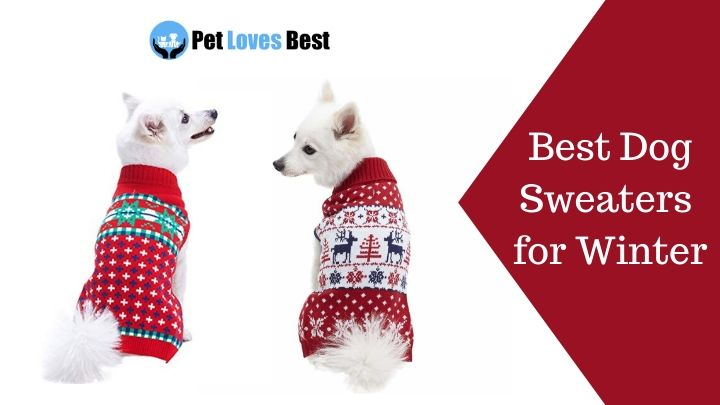 The 15 Best Dog Sweaters for Winter in 2020 Pet Loves Best