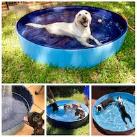 Best Swimming Pools for Dogs
