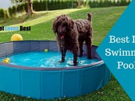 Best Dog Swimming Pools Featured Image