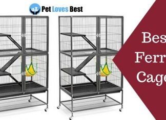 Best Ferret Cages Featured Image