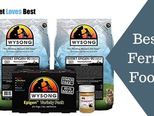 Best Ferret Foods Featured Image