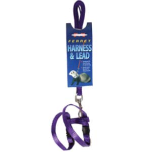 Best Ferret Harness with Leash