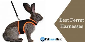 Best Ferret Harnesses Featured Image