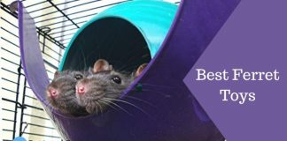 Best Ferret Toys Featured Image