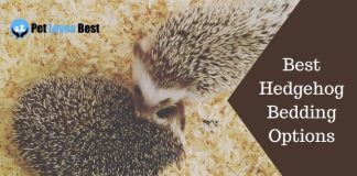 Best Hedgehog Bedding Options Featured Image