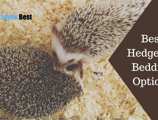 Best Hedgehog Bedding Options Featured Image