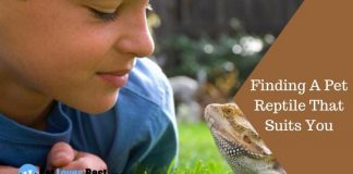 Finding A Pet Reptile That Suits You Featured Image