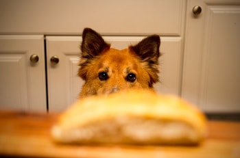 feed the right food to your dog