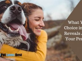 What Your Choice in a Pet Reveals About Your Persona Featured Image