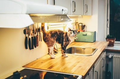 a cat on kitchen platform