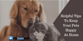 Helpful Tips To Keep Your Pets Happy At Home Featured Image