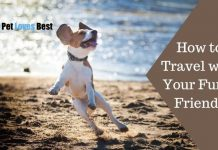 How to Travel with Your Furry Friends Featured Image