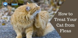 How to Treat Your Cat from Fleas Featured Image