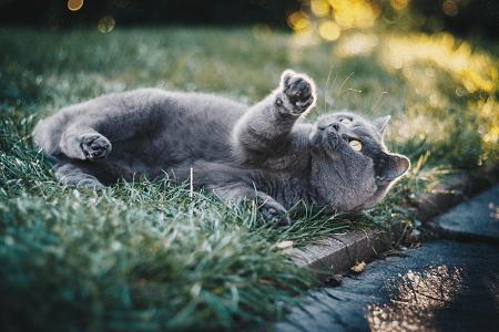 methods to treat cat fleas