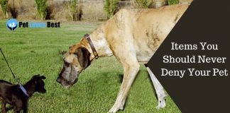 Do Large Breed Dogs Need Special Care Featured Image