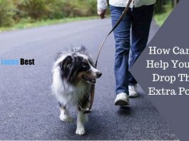 How Can You Help Your Dog Drop Those Extra Pounds Featured Image